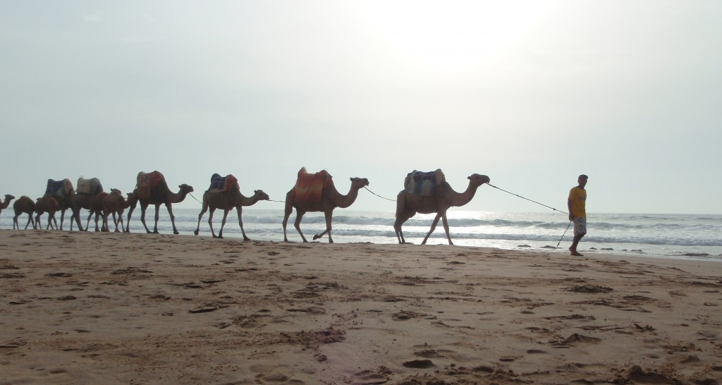 camels on beach Morocco